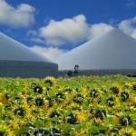 Bioenergia incepe sa castige teren pe piata romaneasca