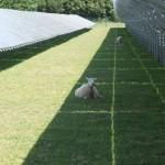 Guvernul britanic va sista subventiile pentru fermele solare