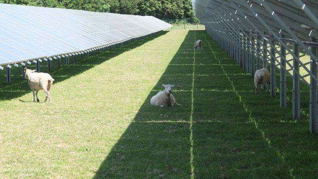 ferma solara 1
